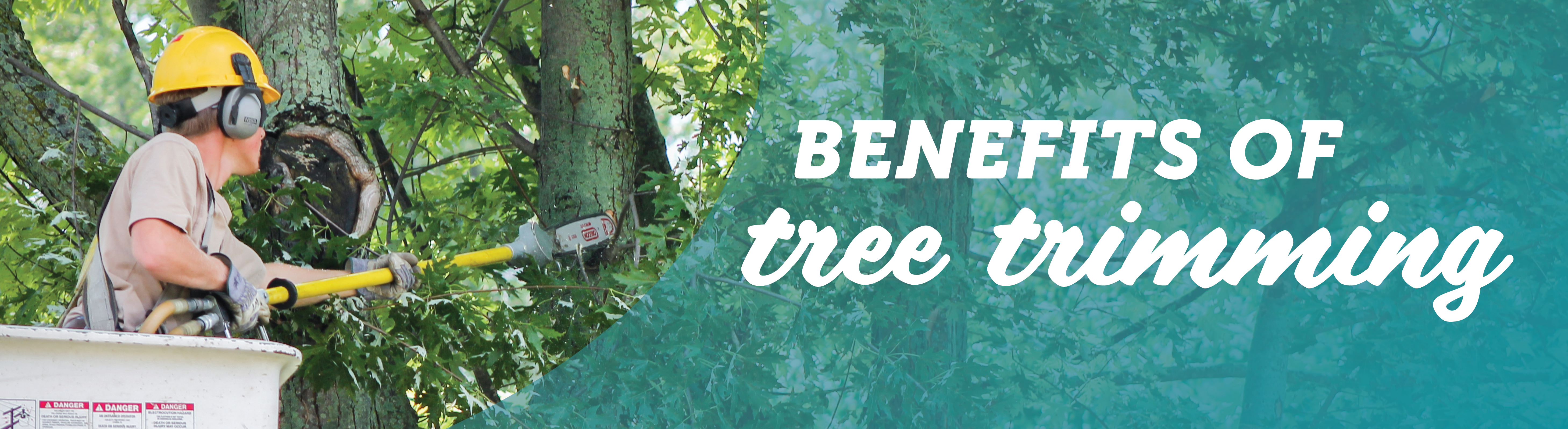 Learn Benefits of Tree Trimming